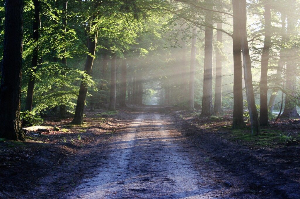 How Forest Bathing is Good to Us